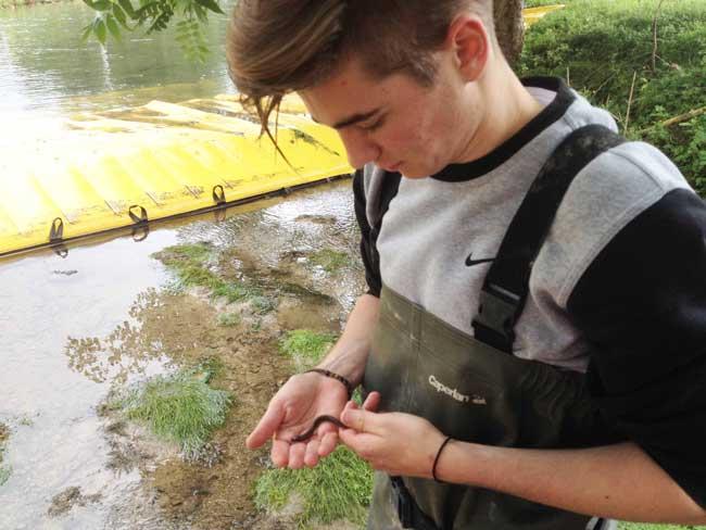 dam økologi naturlige miljø